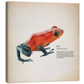 Lienzo  fig5 polygon frog square - Labelizer
