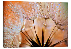 Lienzo  Dandelion Orange Light - Julia Delgado