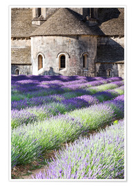 Póster Senanque abbey and lavender, Provence