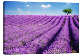 Lienzo  Lavender field and tree - Matteo Colombo