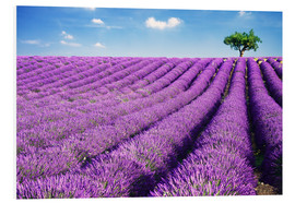 Forex  Lavender field and tree - Matteo Colombo