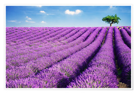 Póster  Lavender field and tree - Matteo Colombo