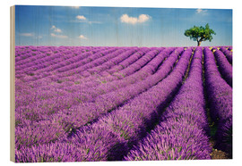 Cuadro de madera  Lavender field and tree - Matteo Colombo