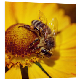 Forex  Flowers carousel for bees - Dirk Driesen