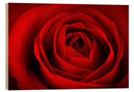 Cuadro de madera  red rose - pixelliebe