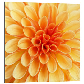 Cuadro de aluminio  Yellow Dahlia - Martina Cross