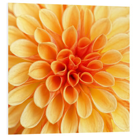 Cuadro de PVC  Yellow Dahlia - Martina Cross