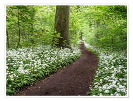 Póster Path through the Forest full of Wild Garlic