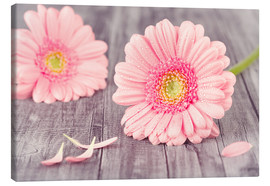 Lienzo  Gerbera flower bloom - pixelliebe