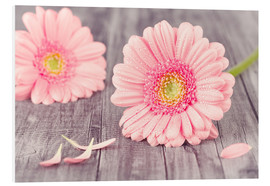 Forex  Gerbera flower bloom - pixelliebe