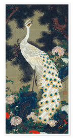Itô Jakuchu - A White Peacock under a Pine tree