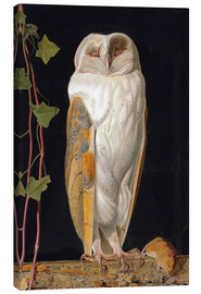 Lienzo  The White Owl - William James Webbe