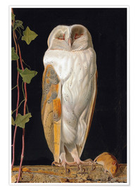 Póster  The White Owl - William James Webbe