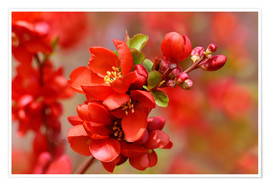 Póster Spring in Red