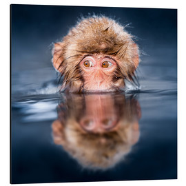 Cuadro de aluminio  Japanese Snow monkey bathing - Jan Christopher Becke