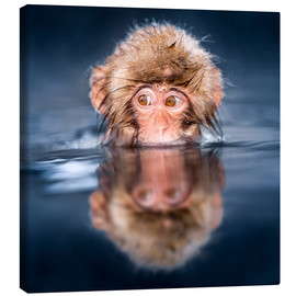 Lienzo  Japanese Snow monkey bathing - Jan Christopher Becke