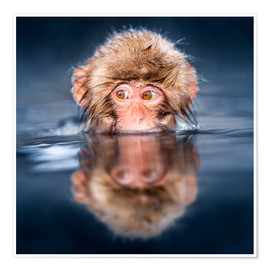 Póster Japanese Snow monkey bathing