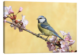 Lienzo  Blue tit on a branch of cherry - Uwe Fuchs