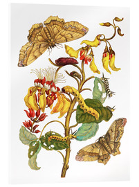 Metacrilato  Coral tree and silkworm - Maria Sibylla Merian
