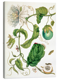 Lienzo  Passion flower and insects - Maria Sibylla Merian