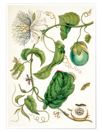Póster  Passion flower and insects - Maria Sibylla Merian