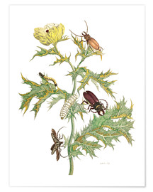 Póster  Mexican Prickly Poppy and longhorn beetles - Maria Sibylla Merian