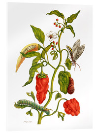 Metacrilato  Peppers and insects - Maria Sibylla Merian