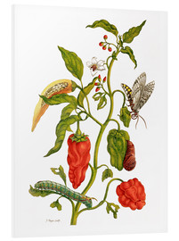 Forex  Peppers and insects - Maria Sibylla Merian