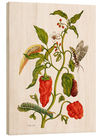 Madera  Peppers and insects - Maria Sibylla Merian