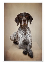 Póster German shorthaired pointer / 1