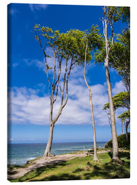 Lienzo  Coastal forest on shore of the Baltic Sea - Rico Ködder