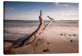 Lienzo  Drift wood on shore of the Baltic Sea - Rico Ködder