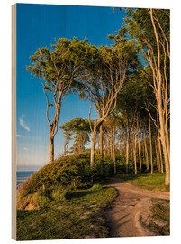 Cuadro de madera  Coastal forest on shore of the Baltic Sea - Rico Ködder