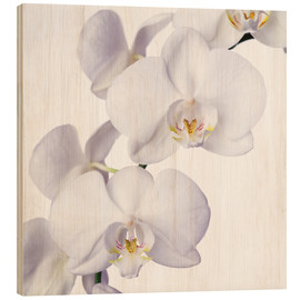 Cuadro de madera  Orchid flowers - Johnny Greig
