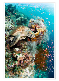 Póster Green turtle