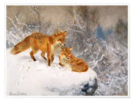 Póster Two foxes in a winter landscape