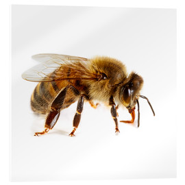 Cuadro de metacrilato  Honey bee