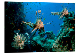 Cuadro de metacrilato  Lionfish on a reef - Georgette Douwma