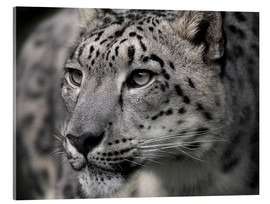Metacrilato  Snow leopard - Linda Wright