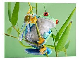 Cuadro de metacrilato  Red-eyed tree frog - Linda Wright
