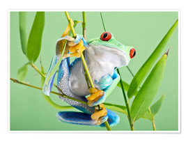 Póster  Red-eyed tree frog - Linda Wright