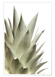 Póster  White pineapple - Neal Grundy