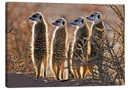 Lienzo  Meerkats on guard duty - Tony Camacho
