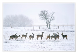 Póster Roe deer in winter