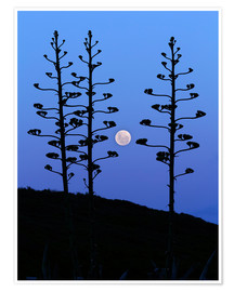 Póster  Full Moon and agave trees - Luis Argerich
