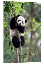 Metacrilato  Panda on a tree - Tony Camacho