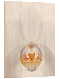 Cuadro de madera  in the throat of the Orchid - GAVIN KINGCOME