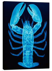 Lienzo  X-ray of lobster - D. Roberts