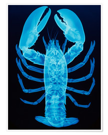 Póster  X-ray of lobster - D. Roberts