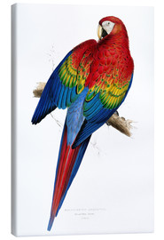 Lienzo  Red & Yellow Macaw - Edward Lear